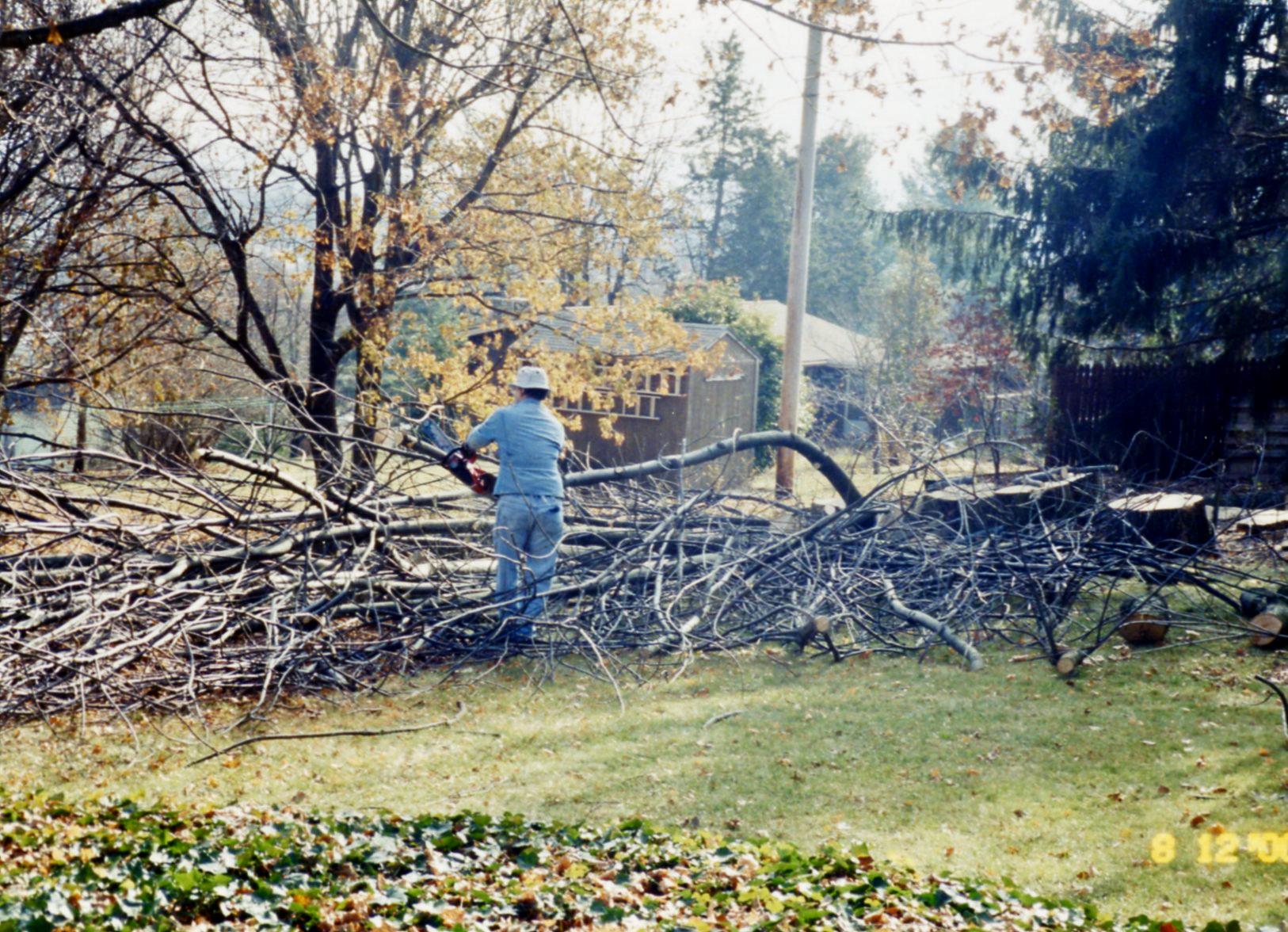 Ash tree down '00